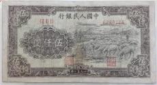解读一版币1949年五元水牛纸币是否有投