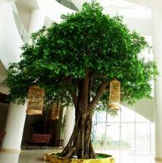 大型假树厂家供应仿真树订做价格