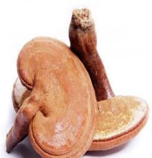 安徽灵芝孢子粉价格