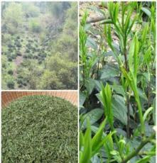 宣城绿茶批发