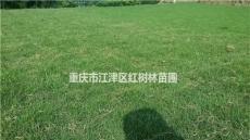 台湾二号草坪