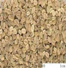 蛇床子產地,重慶蛇床子,中藥材種子交易網黨參遠志白術