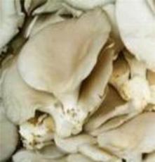 鮮平菇 古田鮮平菇 新鮮平菇 產地直銷