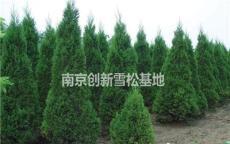 蜀檜價格參考標準 蜀檜小苗0.5米1米2米2.5米價格