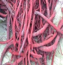 中藥材種子交易網(圖)、丹參種子批發