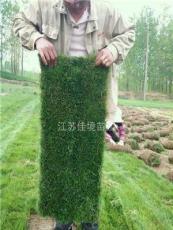 低價百慕大草坪