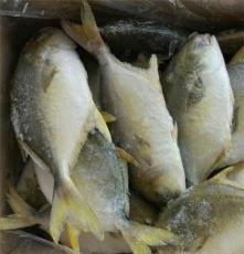 鑫融聚水產海鮮批發 冰鮮冰凍金鯧魚 冷凍金昌魚海捕鯧魚