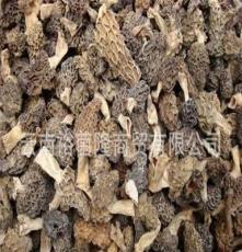 批發羊肚菌干貨 剪腳3-5CM 羊肚菌蘑菇 羊肚菌產地 圓頂羊肚菌