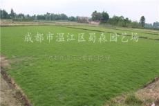 四川草皮*新報價/草皮圖片