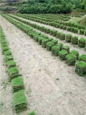 長沙縣綠化草皮,長沙馬尼拉草卷