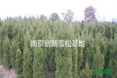 南京創新蜀檜基地 南京創新蜀檜基地的蜀檜價格