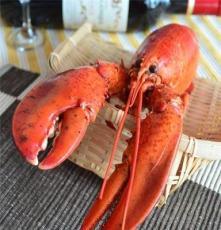進口冰凍海鮮水產品  熟凍加拿大波士頓龍蝦 酒店食材供應批發