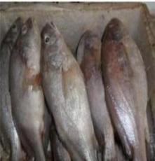 厂家直销 冷冻白菇鱼 顶级 进口  5200元/吨
