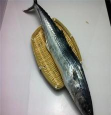 东海野生马鲛鱼 新鲜马鲛鱼 白鲜当天码头上岸直接打包发货