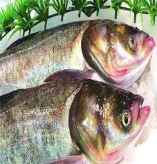 佛山宏鸿蔬菜配送食材配 送农产品配送一站式采购--大头鱼