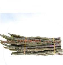 懷化鐵皮楓斗顆粒銷售部