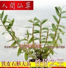 岳陽鐵皮石斛苗盆栽苗大苗銷售