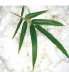 厂家直销 特价供应32S竹棉纱线,针织用纱,高档纱线