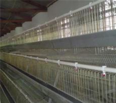 口碑好鸡笼供应厂家口碑好鸡笼供应厂家