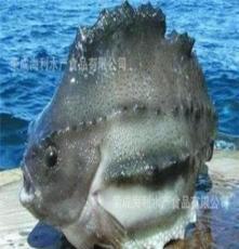 供海參班魚