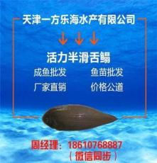辽宁盘锦批发卖半滑舌鳎鱼苗厂家