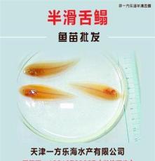 广东中山卖半滑舌鳎鱼苗厂家