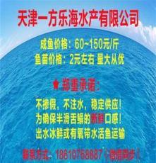 广东河源批发卖半滑舌鳎,鳎鱼鳎米鱼鳎目鱼鳎嘛鱼厂家