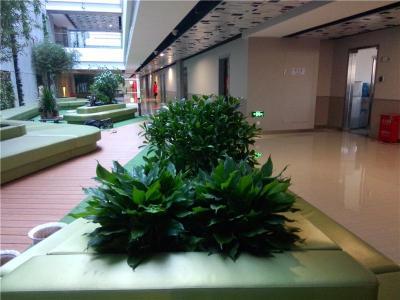 北京花卉绿植短租北京绿植花卉临时租赁公司
