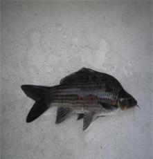 新鲜食材供应 佛山宏鸿农产品配送 食堂一站式配送 服务-岩撞鱼