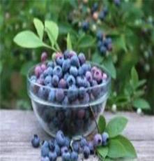 野生藍莓12.5kg箱裝果脯