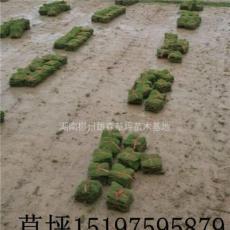 湖南草皮,湖南馬尼拉草皮價格,永州草皮