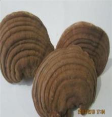 阿拉善東北地區靈芝孢子粉價格