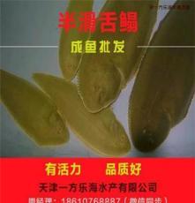 江苏淮安卖半滑舌鳎,鳎鱼鳎米鱼鳎目鱼鳎嘛鱼厂家
