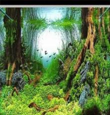 德州即墨淄博墻壁魚缸