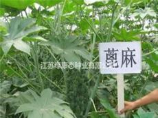 蓖麻生理特性,需要种子请联系绿康态