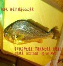 专业提供 冰鲜鱼 海鲜水产批发 大黄鱼 食品