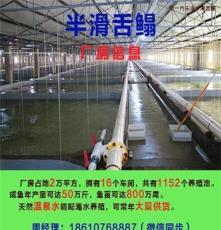 遼寧遼寧丹東批發賣半滑舌鰨魚苗廠家