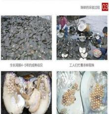 珍珠手链 天然淡水珍珠手饰手链 韩款手饰 华东国际珠宝城