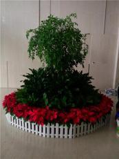 办公室花卉绿植租赁办公室绿植租摆服务
