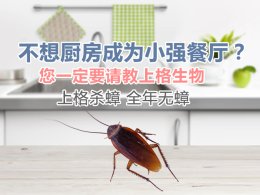 上海驱除跳蚤 上海单位消灭老鼠