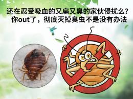 上海食品厂消杀多少钱 上海西餐厅驱跳蚤