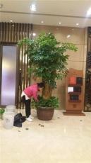 北京专业花卉绿植出租专业花卉绿植租摆服务