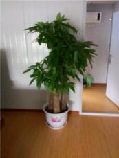 北京办公室花卉绿植专业租赁服务