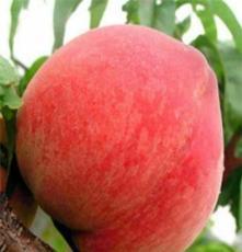 桃树苗映霜红