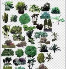 大量廉价供应各种3-30cm规格灌木