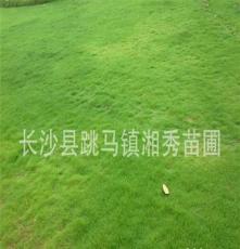 土地征收低价供应10万平方马尼拉草皮