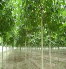重庆多种苗木种植林业开发批发厂家 巫山县宏艳农业开发有限公司