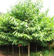 巫山县宏艳农业开发有限公司提供 重庆高品质苗木种植厂家