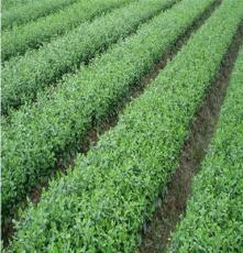 巫山县宏艳农业开发有限公司提供 重庆优质苗木种植厂家
