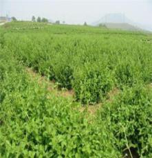 重庆多种苗木种植林业开发供应厂家 巫山县宏艳农业开发有限公司